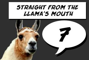 Llama Score: 7